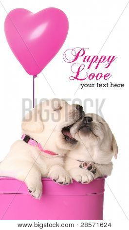 Valentine puppies and pink heart balloon.