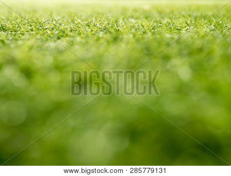 Texture Of Plastic Artificial Grass Of School Yard By Shallow Depth Of Field