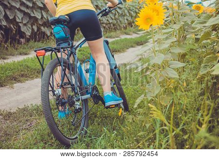 Young woman bicyclist riding in sunflower field poster
