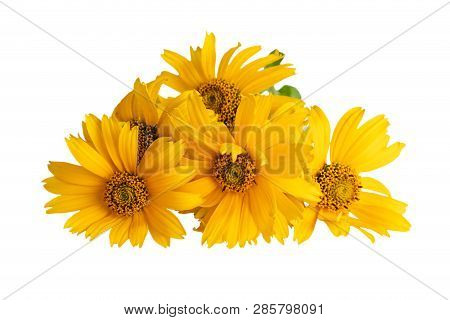 Heliopsis Flowers Or  False Sunflower, Oxeye Sunflower, Sweet Smooth Oxeye On White