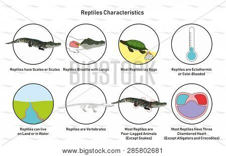 Reptiles Characteristics infographic diagram including scales scutes lay eggs cold blooded vertebrates heart four legged for biology science education
