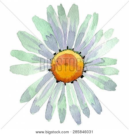 White Daisy Floral Botanical Flower. Watercolor Background Illustration Set. Isolated Daisy Illustra