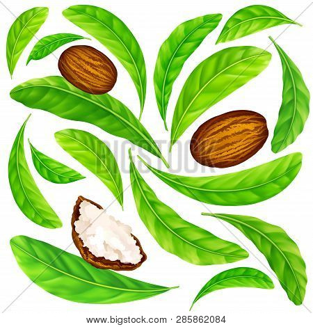 Shea Nuts With Leaves In Vector Pattern. Vector Seamless Pattern Of Shea Nuts With Shea Butter And G