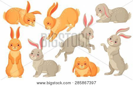 Cartoon Bunny. Rabbits Pets, Easter Bunnies And Plush Little Spring Rabbit Pet Isolated Vector Illus