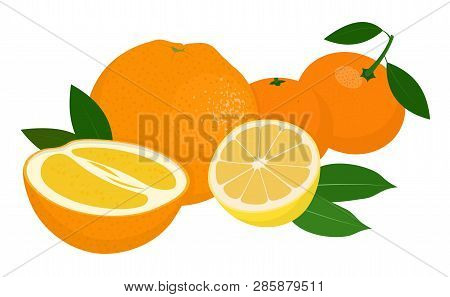 Mandarines, Tangerine, Clementine, Orange, Lemon With Leaves Isolated On White Background. Citrus Fr