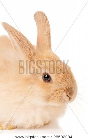 Portrait of adorable rabbit over white background poster