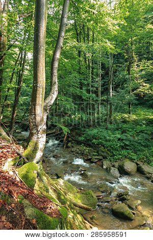 River Among The Rocks In The Forest. Tree On A Cliff. Freshness Of Beautiful Nature Scenery. Sunny S