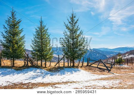 Sunny Springtime Weather In Mountain. Beautiful Carpathian Rural Landscape. Spruce Trees Near The Wo