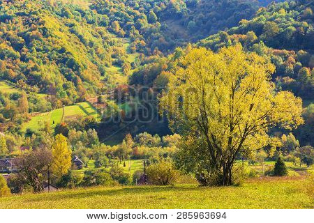 Tree On The Rural Field In Mountains. Beautiful Countryside Scenery In Early Autumn. Village In The