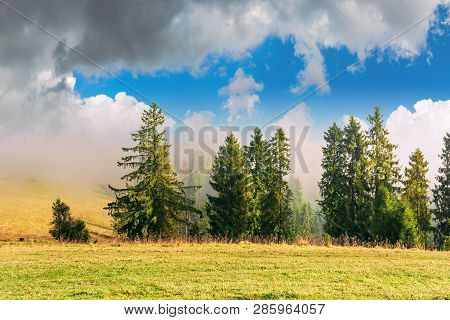 Coniferous Forest On The Hillside In Fog. Fir Behind The Meadow With Weathered Grass. Beautiful Sunn