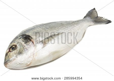 Dorade Fish Isolated On A White Background