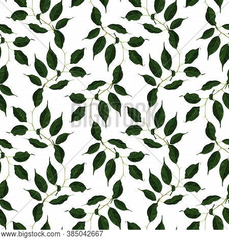 Green Ficus Rubber Plant Branch Leaf Seamless Pattern Texture Background Art