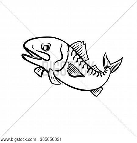 Cartoon Style Illustration Of An Atlantic Mackerel, Boston Mackerel Or Norwegian Mackerel, A Fish Sp