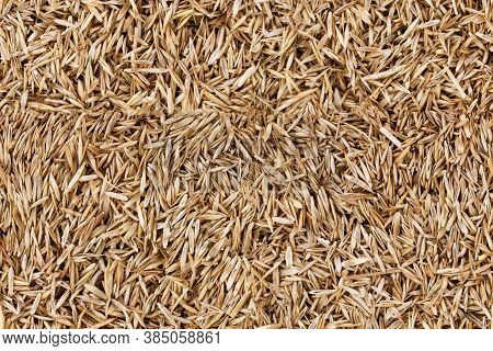 Lawn Grass Seed Background Texture Seamless Texture