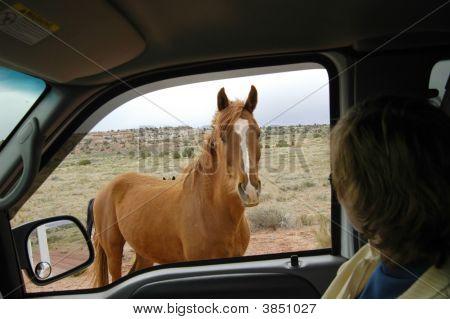 Wild Mustang Horse On The Utah High Desert