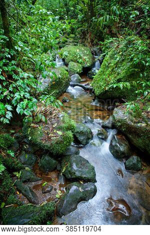 Small Creek In The Monteverde Cloud Forest, Costa Rica