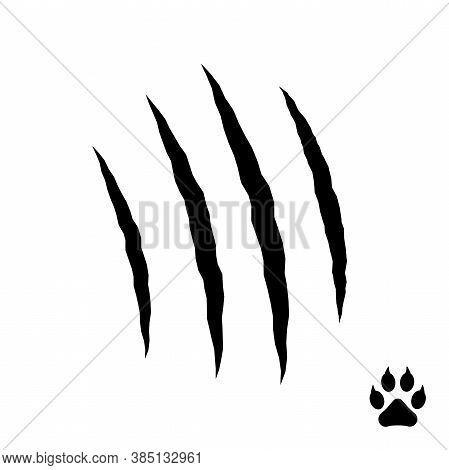 Vector Claws Scratches: Cat, Tiger, Lion And Bear, Isolated On White Background.