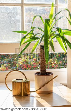 Yucca Indoor Plant Next To A Watering Can In A Beautifully Designed Home Or Apartment Interior.