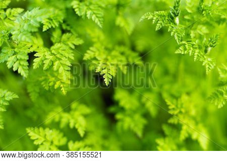 Green Fresh Leaves, Natural Greenery Forest Background