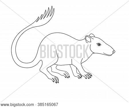 Purgatorius - Extinct Prehistoric Primate - Ancestor Of Apes And Humans - Linear Stock Illustration