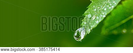 Big Water Drop Water On Green Leaf. Beautiful Leaf With Drops Of Water. Environment Concept. Photo O