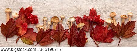 Banner Autumn Background Frame. Red Leaves, Viburnum Berries And Fresh Mushrooms On Wooden Desk. Spa