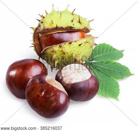 Group of horse chestnut fruits and chestnut spiky capsules isolated on white background.