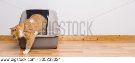 Tabby Cat Step Outside A Litter Box After Poops Or Pee, Banner Size, Copyspace For Your Individual T