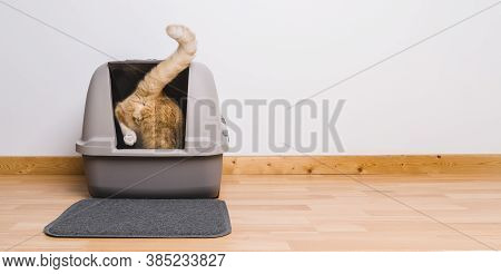 Tabby Cat Step Inside A Litter Box And Poops Or Pee, Banner Size, Copyspace For Your Individual Text