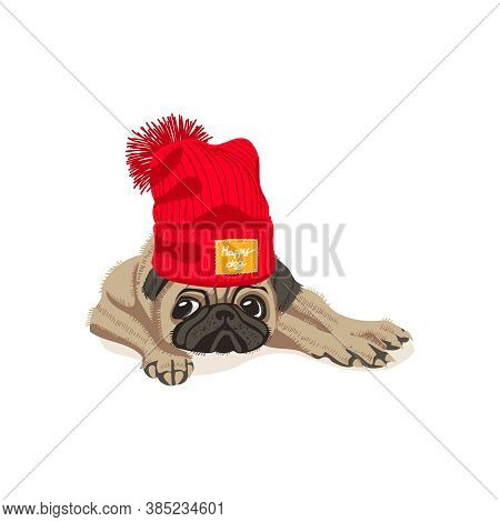 Cute Pug Dog In Knitted Hat. Adorable Friendly Purebred Chubby Pet Animal Wearing Woolen Cap With Po