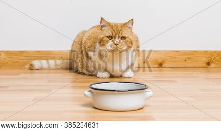 Old Tabby Cat Looking At The Food Bowl