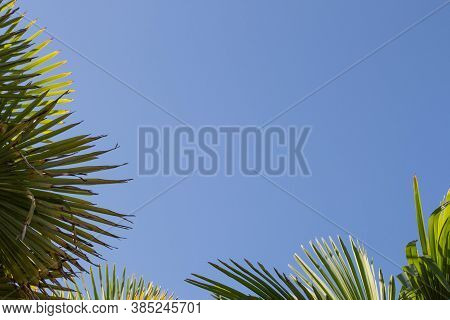 Beautiful Green Palm Leaf Against A Blue Cloudless Sky
