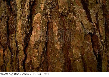 Textured Pine Bark. Patterned, Uneven, Grooved Surface Of Pine Tree Trunk. Close-up Image Of Pine Tr