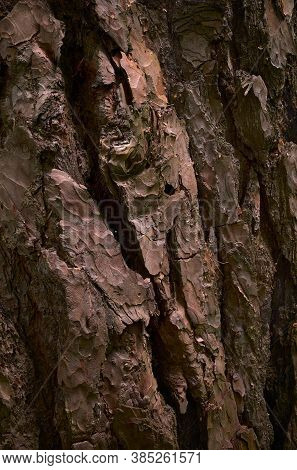 Cracked Pine Bark. Red Cooper Skin Of Old Evergreen Conifer Tree. Close-up Image. A Textured, Groove