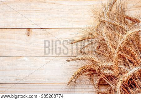 Barley Grain. Whole, Barley, Harvest Wheat Sprouts. Wheat Grain Ear Or Rye Spike Plant On Wooden Tex