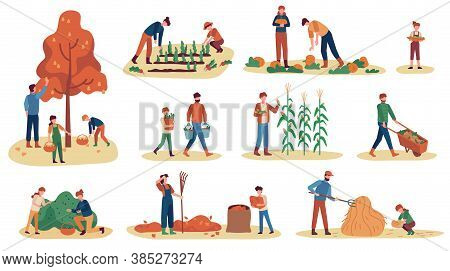 Autumn Gathering. Men, Women And Children Collecting Fruits, Vegetables And Berries. Stacking Hay, W