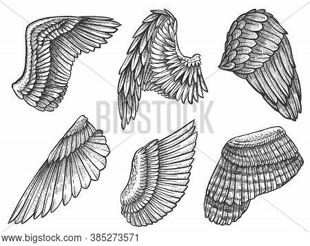 Sketch Wings. Hand Drawn Eagle, Angel Detailed Wing With Feathers, Heraldic Elements For Tattoo, Car