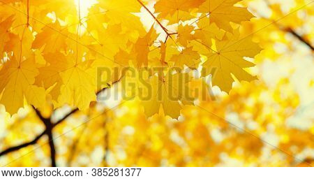 Autumn leaves on blurred nature background. Shallow focus. Fall bokeh.