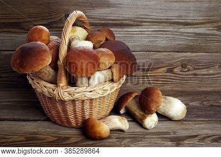 Mushrooms Boletus On Wooden Background. Autumn Mushrooms. Gourment Food