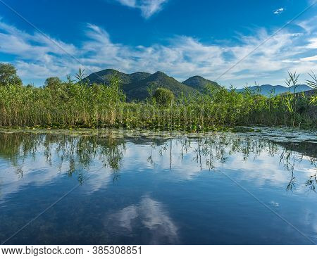 Overgrown Grass Coast Of Skadar (shkoder) Lake In The Background Mountains. With Reflection In The W