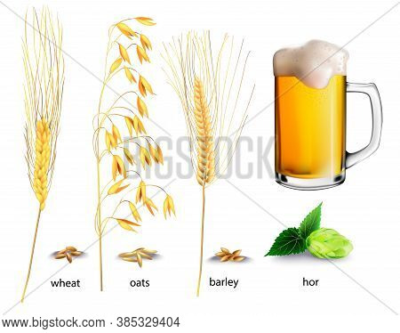 Realistic Vector Illustration Of Plants And Glasses Of Beer. Isolated Image Of Beer, Hops, Wheat, Oa