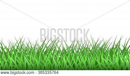 Green Grass. Spring Eco Background. Grass Border Vector Clipart.