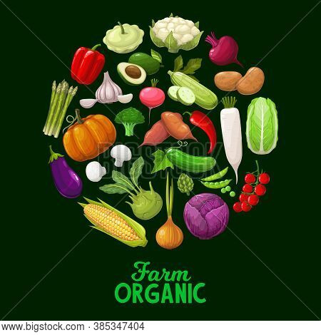 Farm Vegetables, Vector Veggies Squash, Bell Pepper And Cauliflower With Beetroot. Potato, Avocado A