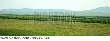 A Panoramic Shot Of The Endless Steppe, With Sparse Bushes And High Mountains In The Background.
