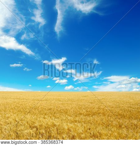 Golden wheat field and bright blue sky with white clouds.