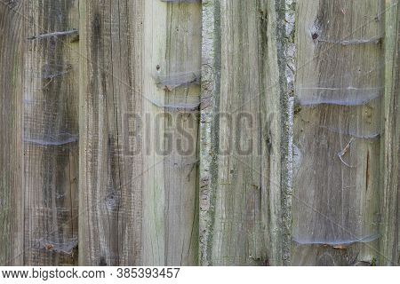 Exterior Weathered Spruce Timber Cladding Facade With Spider Webs, Rough Timber Texture, Wood Claddi