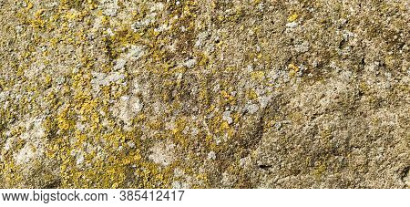 Green Moss On Stone Texture. Mosses And Lichens On The Stone. Yellow - Green And Gray Colors As A Ba