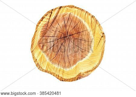 Smooth Cross Section Brown Tree Stump Slice With Age Rings Cut Fresh From The Fores Isolated On Whit