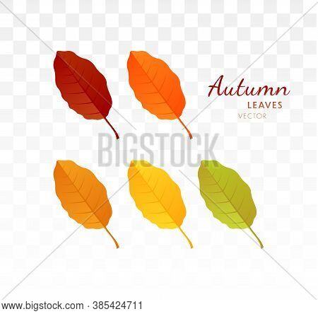 Set Of Bright Realistic Autumn Leaves. Autumn Design Element. Vector Illustration Eps10