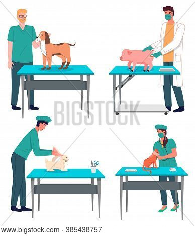 Veterinarian Doctor Treat Animals In The Hospital Office. Man And Woman Standing At A Medical Table